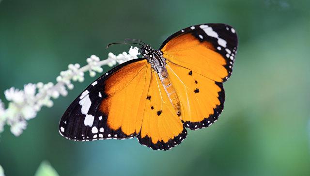 ВГермании количество насекомых снизилось на три четверти за30 лет
