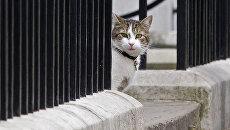 Кот Ларри на Даунинг-стрит в Лондоне, Великобритания. Архивное фото