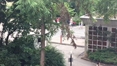 Первые кадры из Мюнхена, где произошла стрельба в торговом центре Олимпия