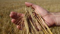 Уборка зерновых в Свердловской области. Архивное фото