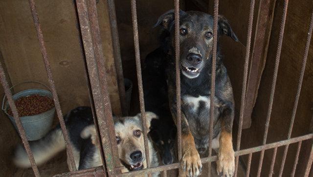 На северо-западе Москвы тридцать бездомных животных сгорели в приюте