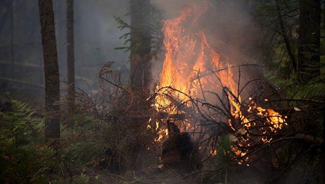 Под Ростовом лесной пожар охватил более трех тысяч гектаров