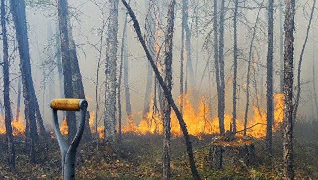ВИркутской области полыхает Байкало-Ленский заповедник