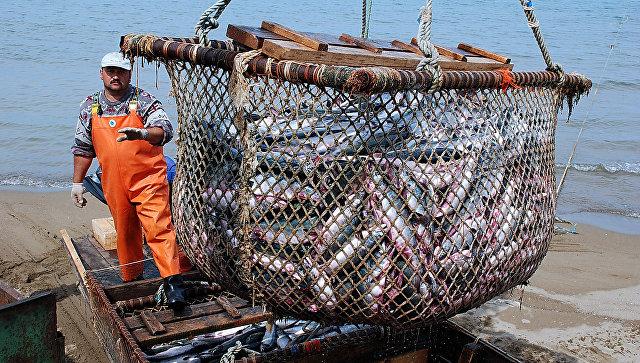 Вылов рыбы. Архивное фото