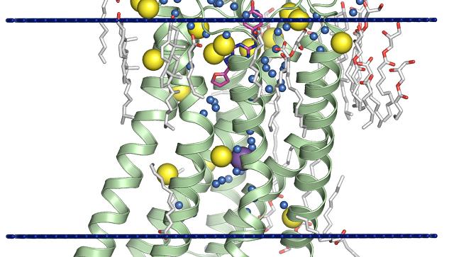 Создан лазер, способный ускорить определение структур белков, важных для медицины