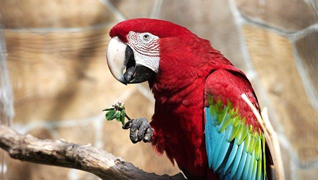 Зеленокрылый попугай. Архивное фото