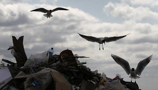 Полигон для утилизации бытовых отходов Ашитково в Воскресенском районе Московской области
