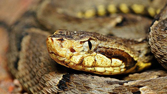 Два сердца, две головы: вСША отыскали  редкую змею