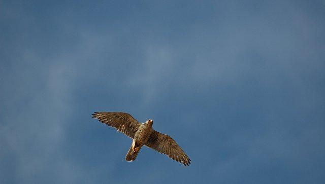 ИзОмской области недали вывезти четырех краснокнижных птиц