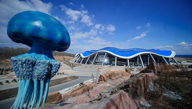 Вглобальной сети разместили петицию стребованием закрыть Приморский океанариум