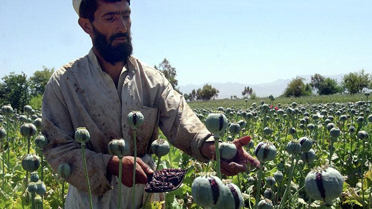 Федотов: саморегулирование рынка снизило наркопроизводство в Афганистане