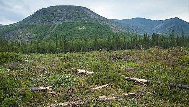 Руководство посчитало, кто исколько нелегально вырубил украинских лесов
