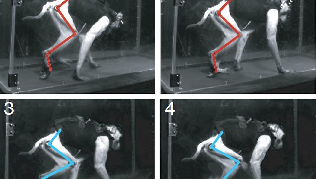 Электрошок икибер-чип обучили парализованную макаку ходить— Ученые