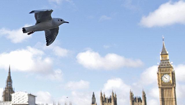 Чайка летит над Темзой в Лондоне