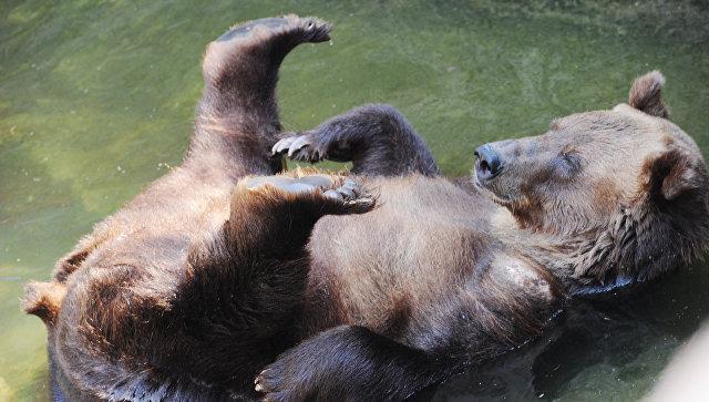 Кумедне відео: як на Прикарпатті ведмідь воді тішиться