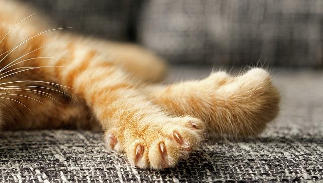 Лапы котенка, архивное фото