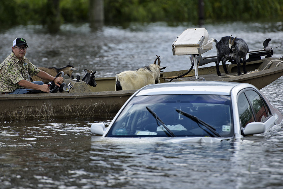 Мужчина спасает животных во время наводнения в Гонзалес, штат Луизиана, США