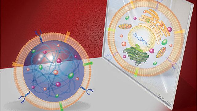 Ученые создали искусственные регенерирующие стволовые клетки