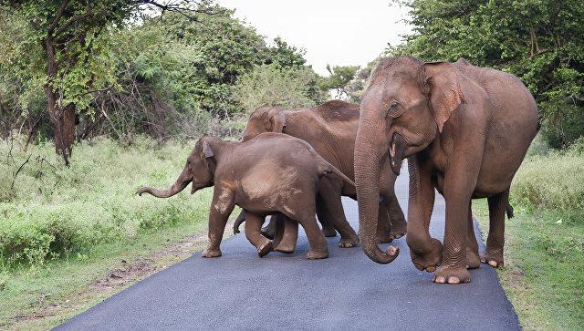 В итоге нападения дикого слона наюго-западе Китая умер человек