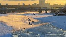 Чайки над Москва-рекой в морозный день. Архивное фото