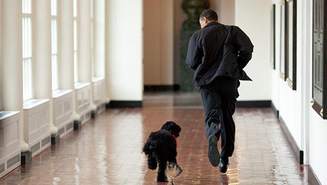 Президент США Барак Обама со своим псом Бо в Белом доме. Вашингтон
