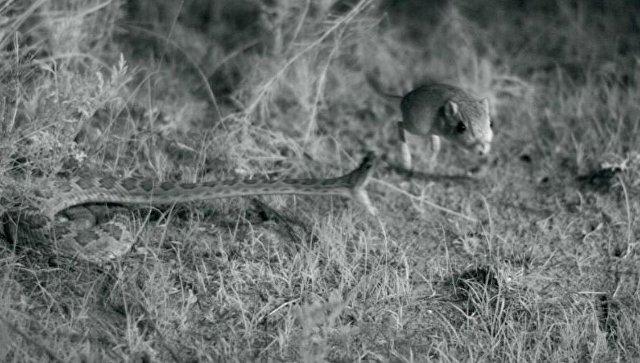 Биологи измерили скорость укуса змеи
