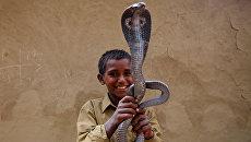 Рави Нат с коброй в поселении заклинателей змей Jogi Dera в штате Уттар-Прадеш, Индия