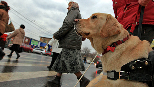 Уход засобаками-поводырями в РФ будут оплачивать
