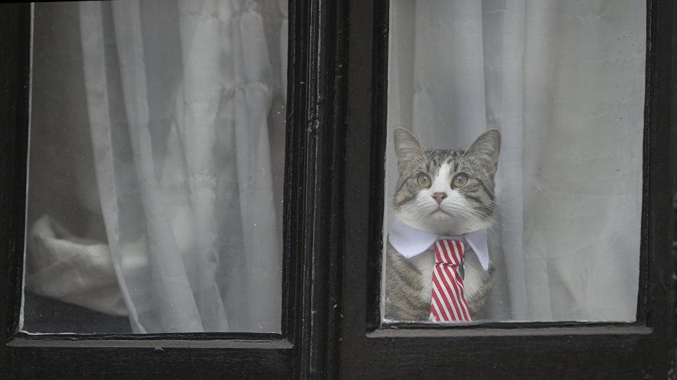 Кот Джулиана Ассанжа у окна посольства Эквадора