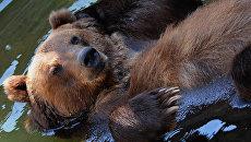 Бурый медведь в Московском зоопарке. Архивное фото