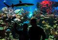 Посетители в Санкт-Петербургском океанариуме
