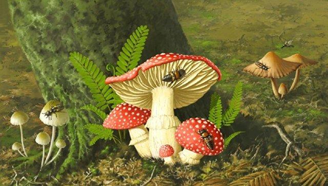 Ученые обнаружили вянтаре грибы возрастом 100 млн лет