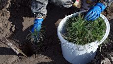 В Кабардино-Балкарии собрали 2 тонны мусора и посадили 300 новых деревьев