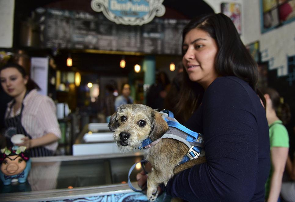 Собака с хозяйкой в кафе города Мехико