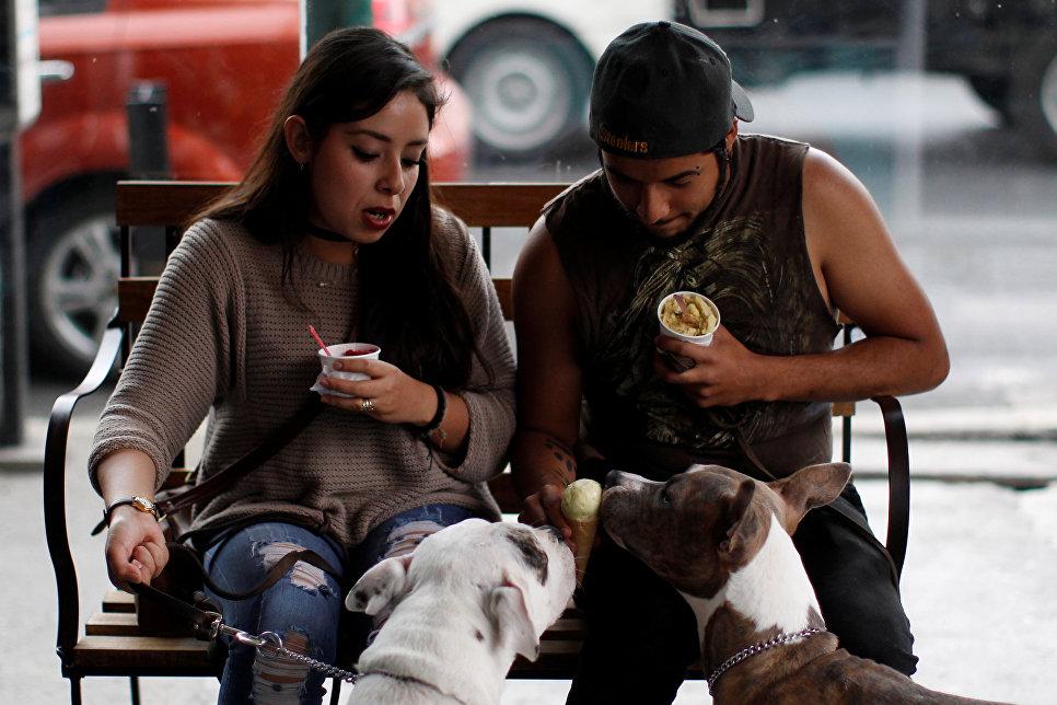 Собаки кушают мороженое для животных в городе Мехико
