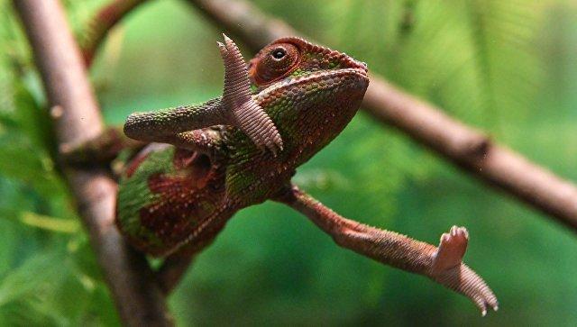 """Из """"Домодедово"""" в США вернули почти 15 тысяч рептилий"""