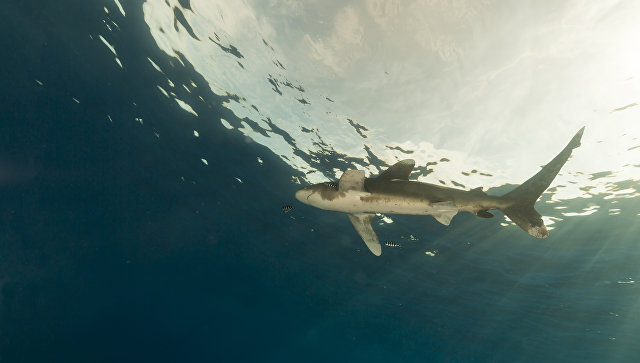 17-летняя девушка погибла в итоге нападения акулы вАвстралии