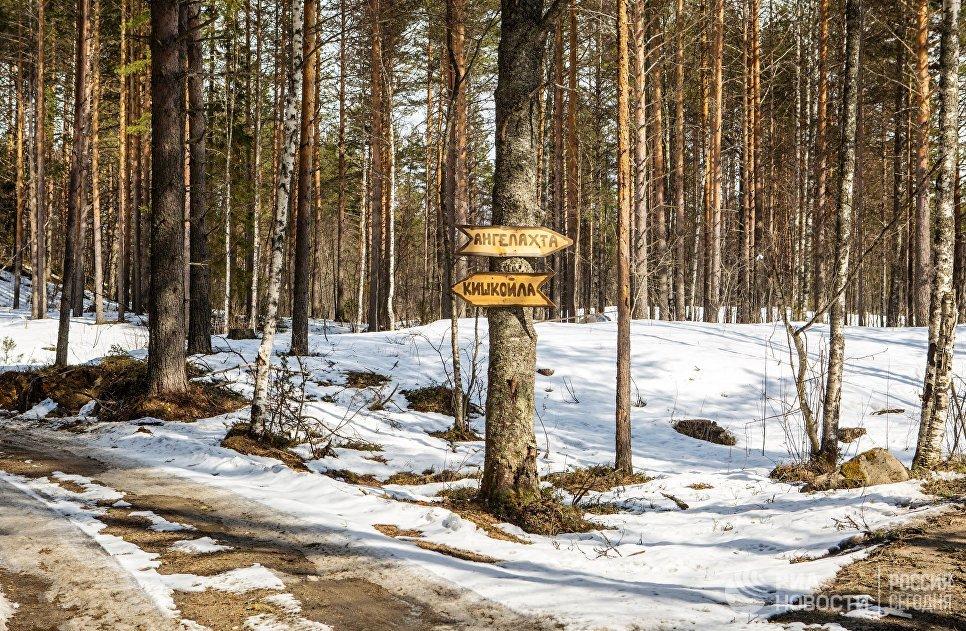 Указатель на развилке лесных дорог в Пряжинском районе Карелии