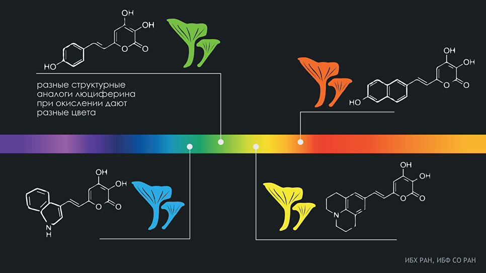 Русские ученые узнали механизм свечения грибов разными цветами радуги