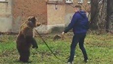 Медведь в Таганроге