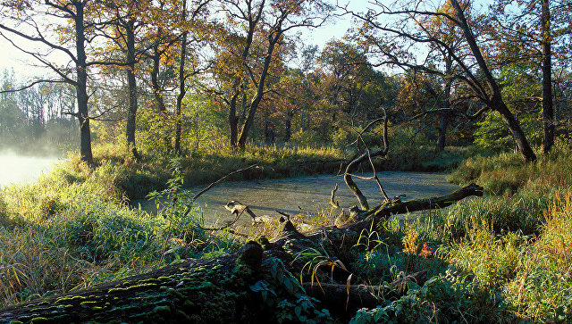 Новая экотропа появится в Брянском лесу