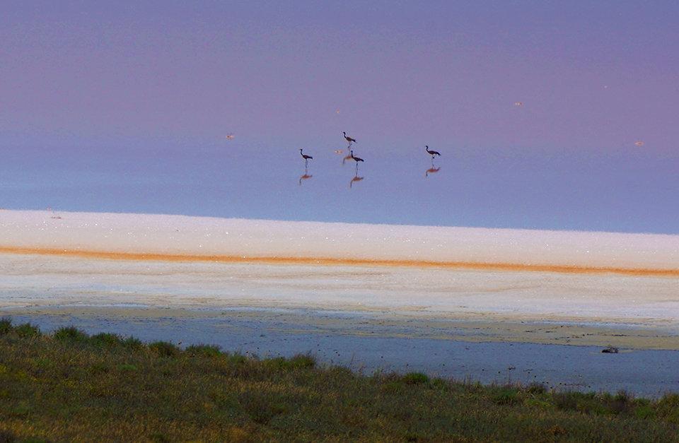 Cемья степного журавля на Кояшском озере