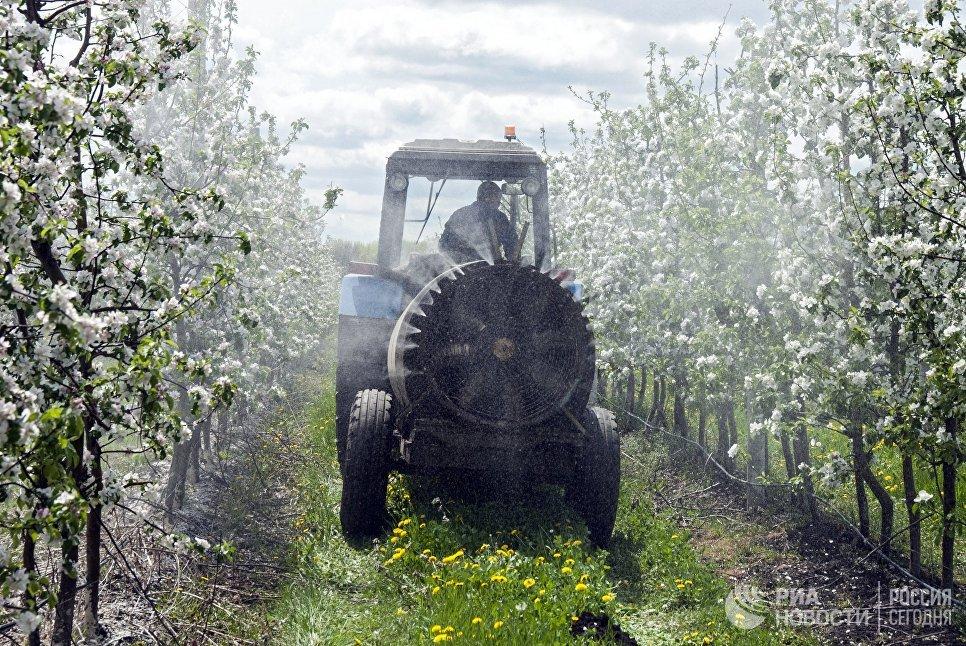 Обработка от вредителей цветущих яблонь в одном из крупнейших садов России ЗАО Корочанский плодопитомник в Белгородской области