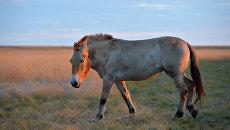 Вячеслав Рожнов: сегодня описано только 20% всех видов на Земле