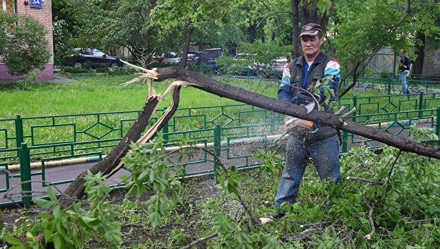 Ликвидация последствий урагана в Москве. 29 мая 2017