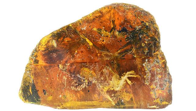 Доисторического птенца возрастом 99 млн лет вянтаре показали встолице Китая