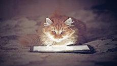 Котенок смотрит в планшет. Архивное фото