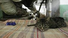 Эрмитажный кот в подвале музея во время ежегодной акции День эрмитажного кота. Архивное фото