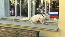 Кот-оракул отверг угощение, но предсказал РФ победу в Кубке конфедераций