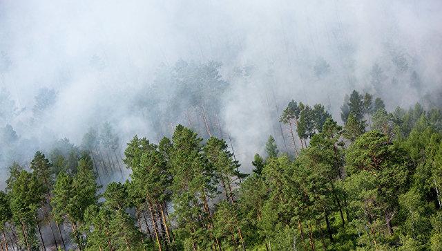 10 гектаров леса засутки сгорело на далеком Востоке